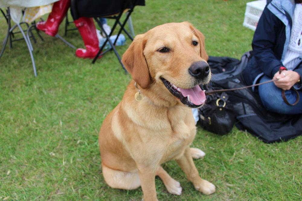 Saffy, 8 months playful pup